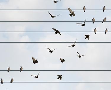 Birds sitting on telephone wire