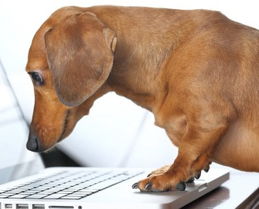 Dog searching on the internet